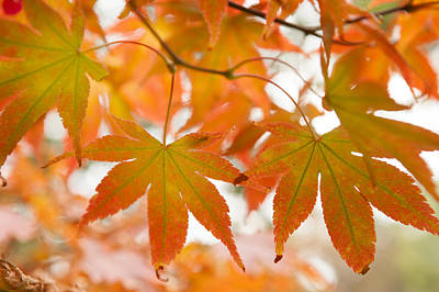 Photograph - Autumn Joy by Jenny Rainbow