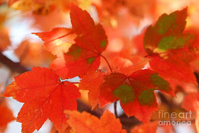 Photograph - Autumn Joy by Karen Adams