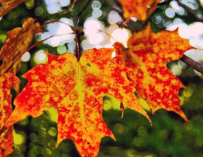 Autumn Photograph - Autumn Joy by Kathleen Sartoris