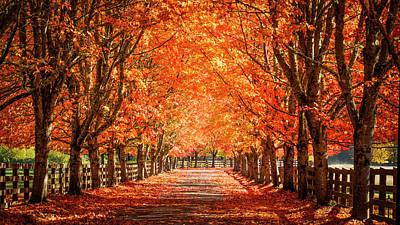 Photograph - Autumn by Kyle Wasielewski