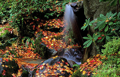 Photograph - Autumn L And Small Waterfall by Jim Corwin