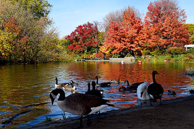 Photograph - Autumn Lake With Geese by Diane Lent