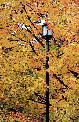 Photograph - Autumn Lampost Iv by Mary Haber
