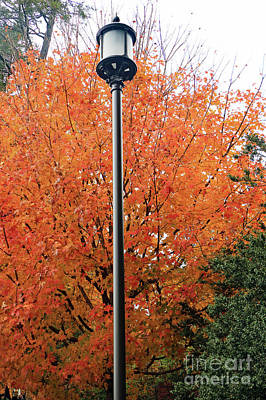Photograph - Autumn Lamppost II by Mary Haber