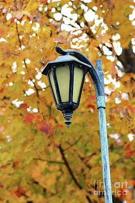 Photograph - Autumn Lamppost by Mary Haber
