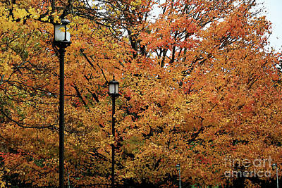 Photograph - Autumn Lampposts by Mary Haber