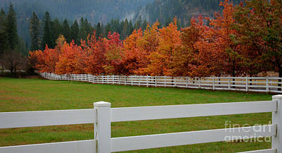 Photograph - Autumn Landscape by Idaho Scenic Images Linda Lantzy