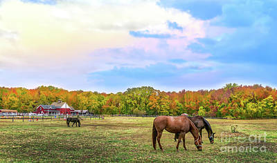 Photograph - Autumn Landscape Of Horses Grazing On A Maryland Farme Of Horses Grazing On A Ma by Patrick Wolf