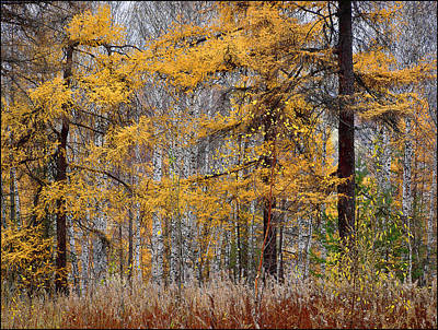 Photograph - Autumn Landscape by Vladimir Kholostykh