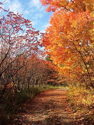 Photograph - Autumn Lane by Pat Purdy
