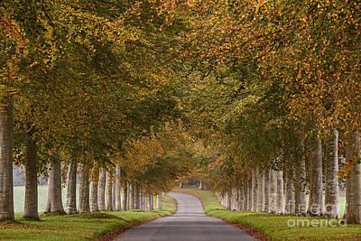 Autumn Lane Art Print by Richard Thomas