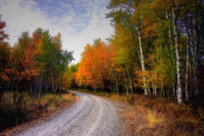 Autumn Lane Original
