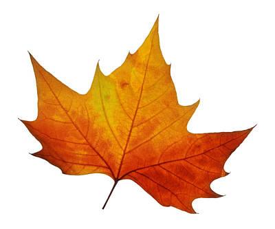 Photograph - Autumn Leaf 1 by Gill Billington
