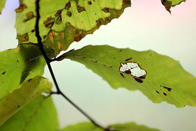 Digital Art - Autumn Leaf 1 by Patrick Groleau