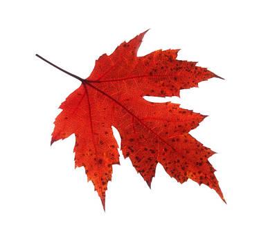 Photograph - Autumn Leaf 2 by Gill Billington