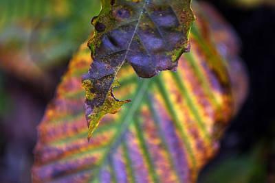 Digital Art - Autumn Leaf 2 by Patrick Groleau