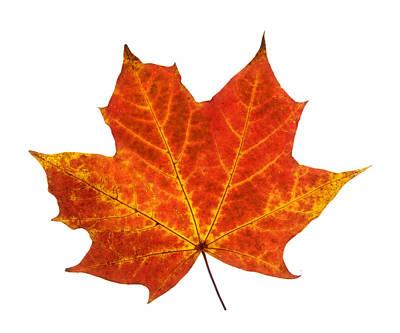 Photograph - Autumn Leaf 3 by Gill Billington