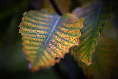 Digital Art - Autumn Leaf 3 by Patrick Groleau