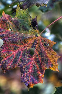 Digital Art - Autumn Leaf 4 by Patrick Groleau
