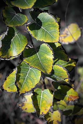 Digital Art - Autumn Leaf 5 by Patrick Groleau