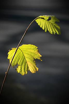 Digital Art - Autumn Leaf 6 by Patrick Groleau