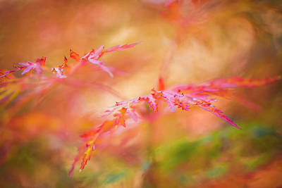 Autumn Leaf Abstract Art Print