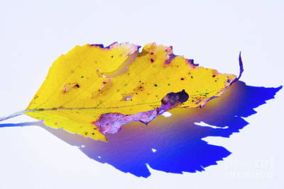 Photograph - Autumn Leaf Abstract by Yulia Kazansky