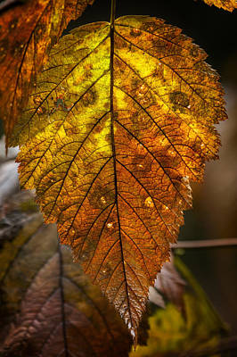 Photograph - Autumn Leaf by Belinda Greb