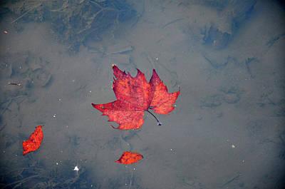 Autumn Leaf Print by Bill Cannon