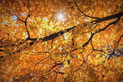 Photograph - Autumn Leaf Branch With Sun Burst by Randall Nyhof