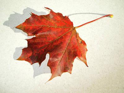 Photograph - Autumn Leaf by Cliff Norton