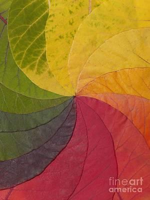 Photograph - Autumn Leaf Color Wheel by David Parker