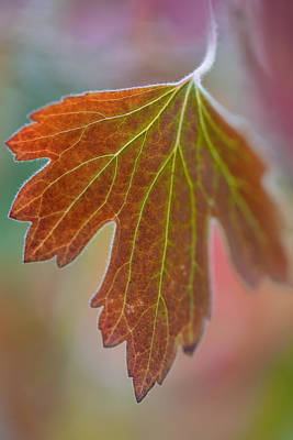 Photograph - Autumn Leaf by Dale Kincaid
