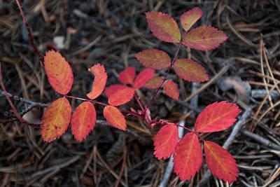Photograph - Autumn Leaf Detail 2 by Cascade Colors