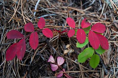 Photograph - Autumn Leaf Detail by Cascade Colors