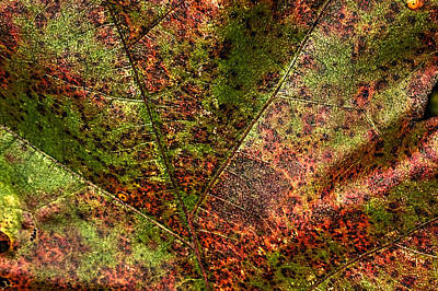 Photograph - Autumn Leaf Detail by Roger Passman