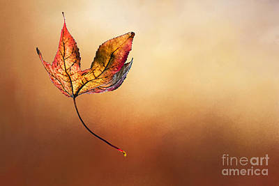 Of Autumn Photograph - Autumn Leaf Falling By Kaye Menner by Kaye Menner