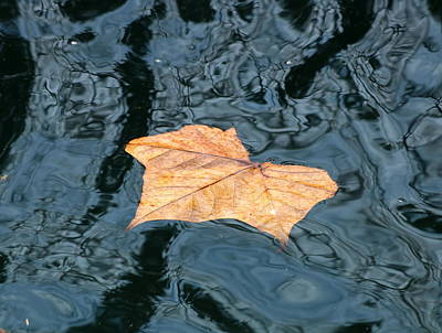 Photograph - Autumn Leaf Floating On Water by Sheila Brown