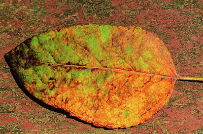 Photograph - Autumn Leaf Four by Tikvah's Hope
