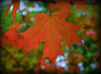 Photograph - Autumn Leaf In The Rain by Suzanne DeGeorge