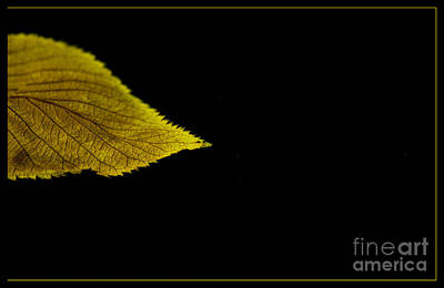 Photograph - Autumn Leaf by Eena Bo