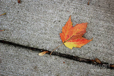 Photograph - Autumn Leaf by Laura Kinker