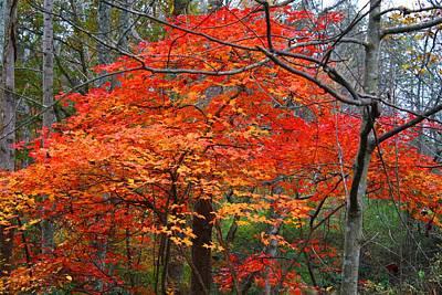 Photograph - Autumn Leaf Maple by Kathryn Meyer