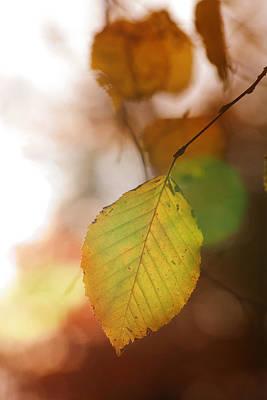 Photograph - Autumn Leaf by Marc Huebner