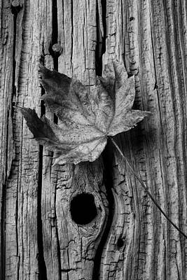 Knothole Photograph - Autumn Leaf On Old Boards by Garry Gay