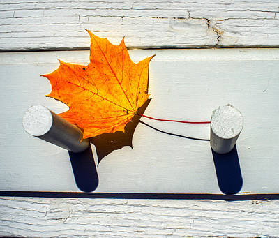 Photograph - Autumn Leaf On Pegs by Gary Slawsky