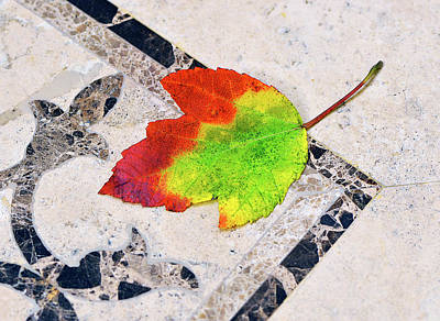 Photograph - Autumn Leaf On Travertine by Marie Hicks