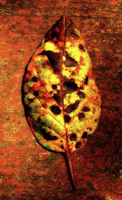 Photograph -  Autumn Leaf One by Tikvah's Hope