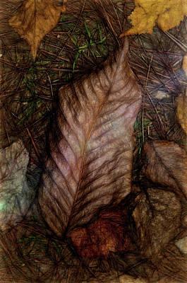 Photograph - Autumn Leaf by Phyllis Meinke