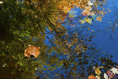 Photograph - Autumn Leaf Reflections by Lon Dittrick
